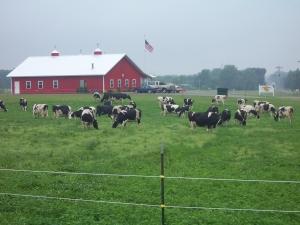 grazingsmall
